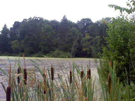 Lake at Duke Farms, Hillsborough