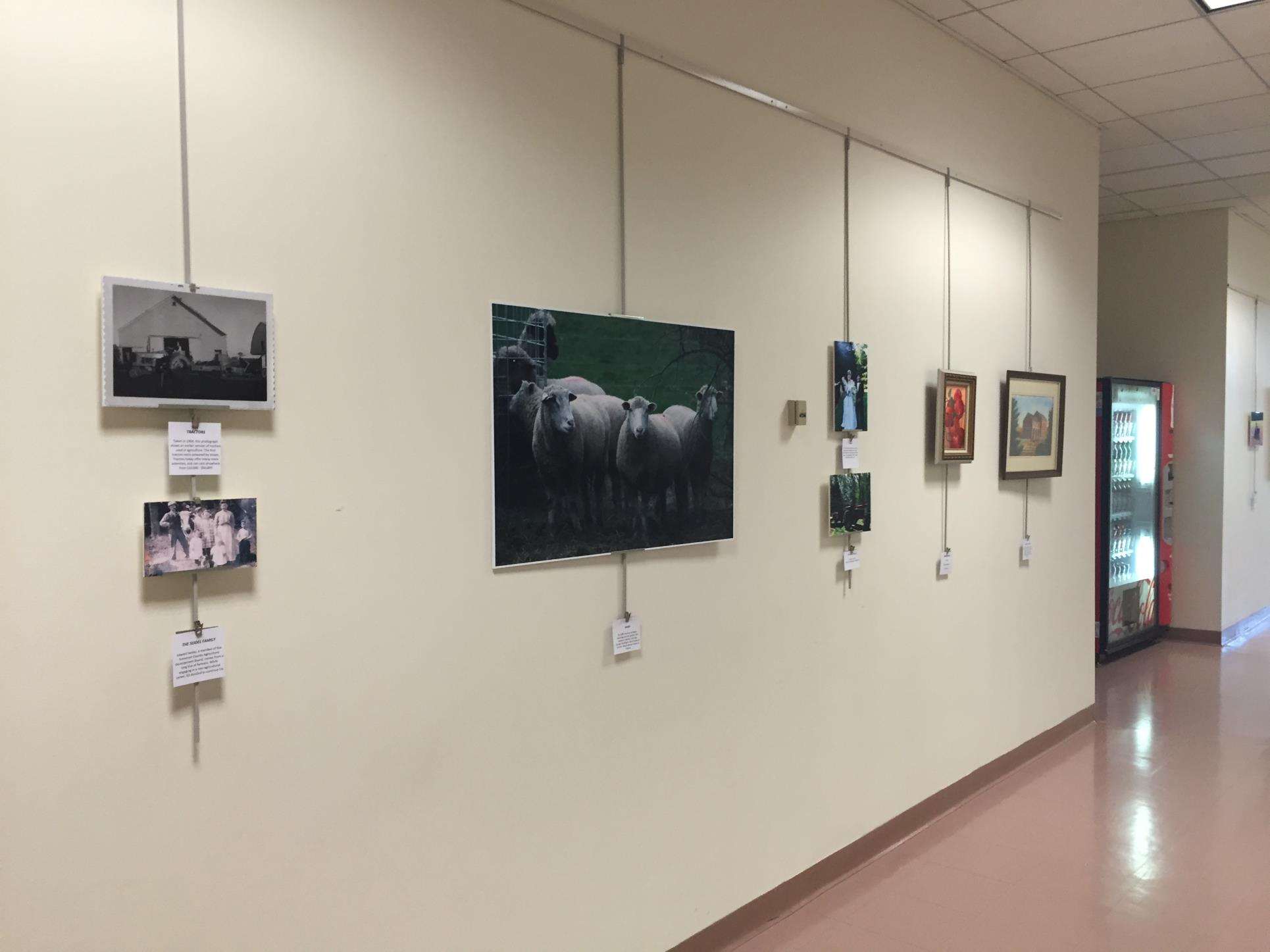 Gallery wall by conference room