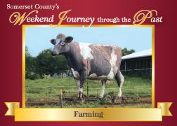 Farming-Cow